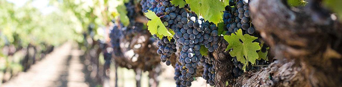 cantine salento vini