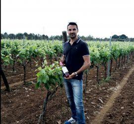 Negroamaro wineyard